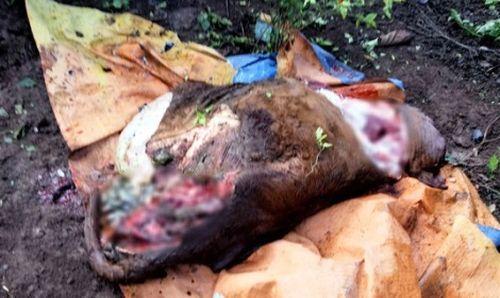 Nhiều vụ trộm đột nhập, giết mổ gia súc