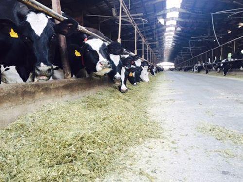 Iran chú trọng xuất khẩu nông sản và gia súc sang Việt Nam