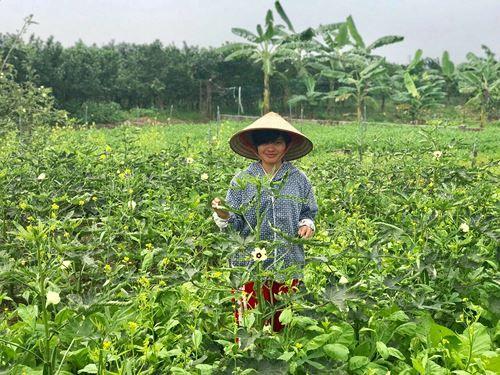 Rời bục giảng, cô giáo thành công với nông nghiệp sạch