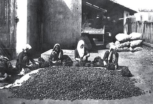 Nông nghiệp Biên Hòa đầu thế kỷ 20