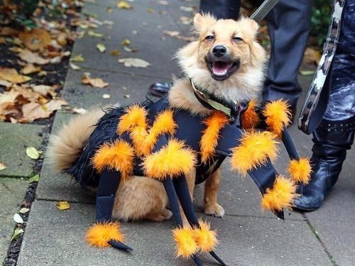 Những chú chó hóa trang Halloween 'chất hơn cả chủ'