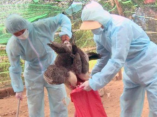Xuất khẩn 5.000 lít hóa chất dập dịch cúm gia cầm có độc lưc mạnh