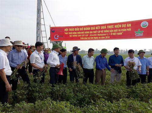Giống lạc TK10 'chinh phục' xứ Nghệ