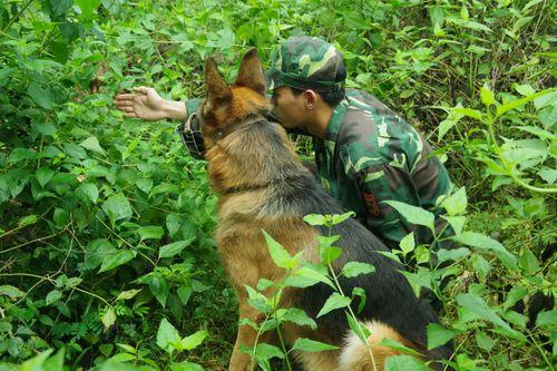 Huấn luyện chó nghiệp vụ đánh bắt đối tượng