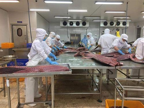 Khánh Hòa phấn đấu kim ngạch xuất khẩu thủy sản đạt 575 triệu USD