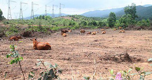 Ông Trần Bắc Hà đã ủng hộ 'siêu dự án' nuôi bò tại Hà Tĩnh 4.500 tỷ thế nào?