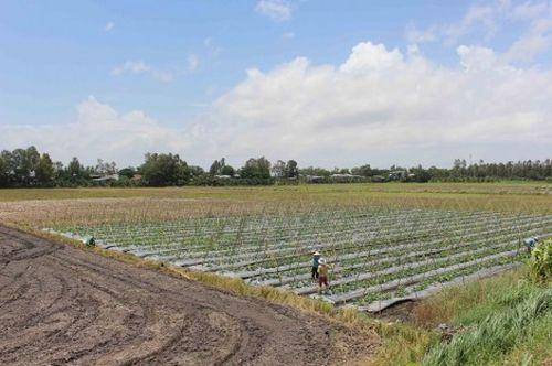 Tập trung phát triển nông nghiệp bền vững