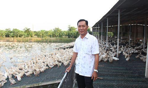 Thu tiền tỷ từ nuôi vịt theo phương thức mới của C.P. Việt Nam