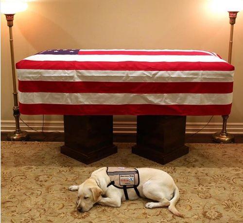 Cảm động hình ảnh chú chó túc trực bên linh cữu cựu Tổng thống Mỹ