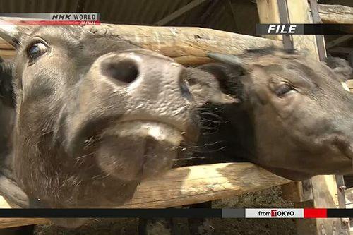 Đối mặt nguy cơ bị khởi tố hình sự vì chuyển lậu… trứng bò
