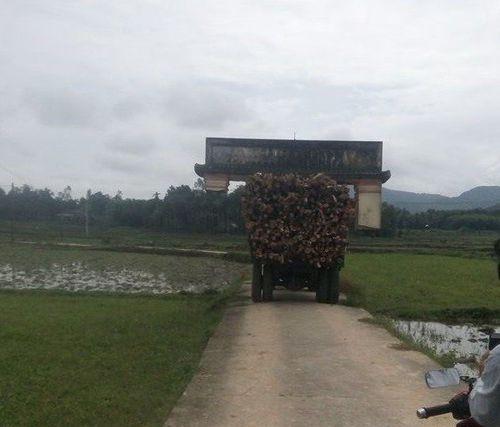 Clip: Bi hài cảnh xe chở gỗ 'cõng' cổng làng chạy băng băng trên đường