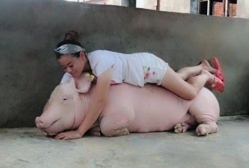 Việc nhàn lương cao sinh viên thử tìm hiểu: Kiếm 3 tỷ đồng/ năm nhờ ngủ cùng lợn suốt 3 tháng mùa đông