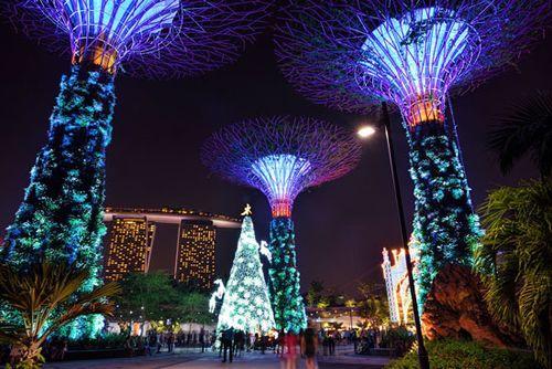 Chiêm ngưỡng những cây thông độc đáo nhất thế giới mùa Giáng sinh