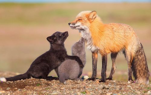 Những bức ảnh động vật hoang dã được khán giả bình chọn năm 2018