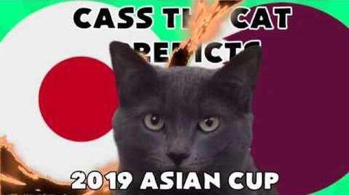 Mèo Cass dự đoán kết quả trận Nhật Bản vs Qatar chung kết ASIAN CUP 2019