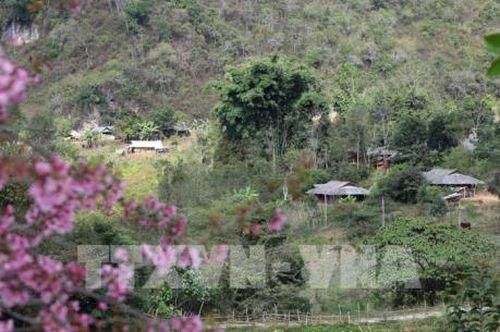 Sắc xuân ở thung lũng Na Ư