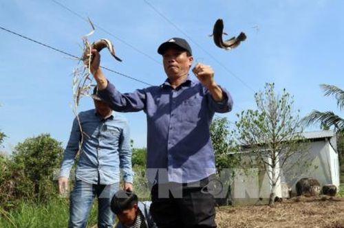 Du lịch sinh thái rừng tràm U Minh Thượng bằng vỏ lãi 'vượt chướng ngại vật'