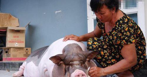 Năm Hợi nghe chuyện về những người coi lợn như thú cưng, gọi heo là 'con gái' trong nhà
