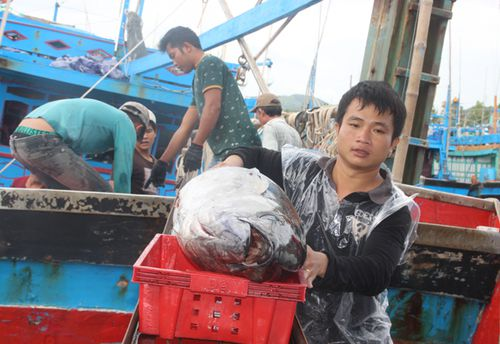 Ra biển săn cá ngừ, về làng xây nhan nhản biệt thự tiền tỉ