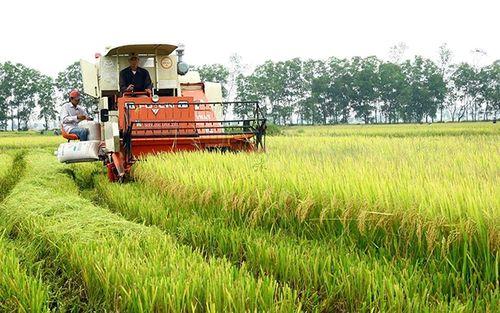 Quảng Trị phát triển sản phẩm nông nghiệp chủ lực