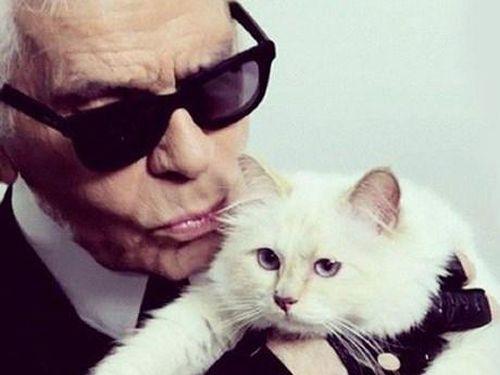 'Cô mèo cưng' Choupette có thể được thừa kế tài sản của Karl Lagerfeld