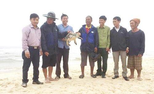 Tự nguyện giao nộp cá thể rùa biển quý