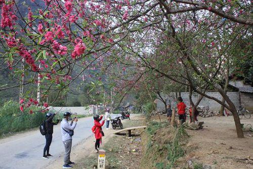 Lễ hội hoa đào trên Cao nguyên đá