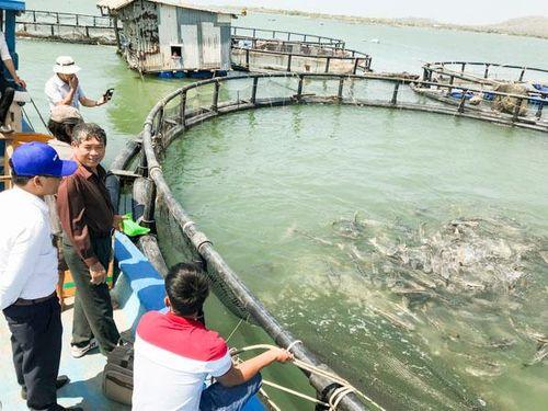 Lợi kép từ ứng dụng công nghệ trong nuôi cá lồng bè