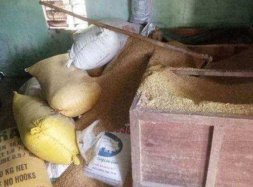 Tiết lộ bất ngờ vụ 49 cây vàng 'bốc hơi' trong đống lúa