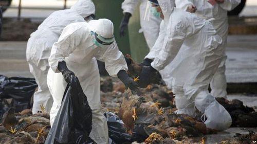 Cúm A/H5N6 nguy hiểm đối với người thế nào?