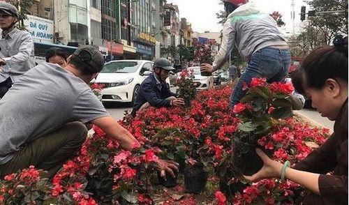 Hôi hoa ở Kim Mã: Bức tranh trần trụi về thói xấu của người Việt