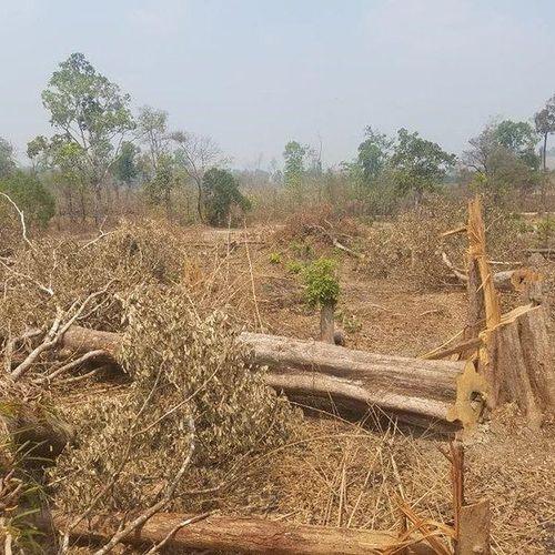 Thông tin mới nhất vụ phá rừng khu vực biên giới xã Ia O