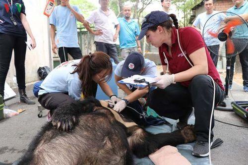 Đồng Nai: Bàn giao 3 cá thể gấu ngựa cho trung tâm bảo tồn