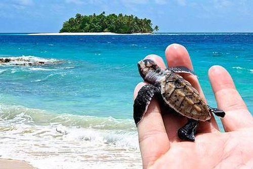 Cô gái bị tố mua trứng rùa biển rồi luộc ăn khi du lịch Côn Đảo