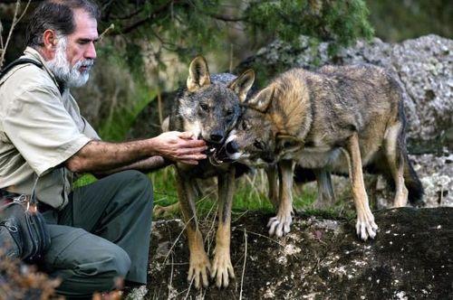 Giải mã nguyên nhân chó phục tùng con người