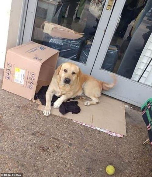 Chó trung thành chờ chủ đã chết suốt hơn một tuần ở bệnh viện