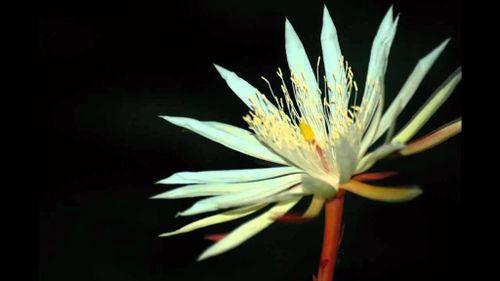 8 loài hoa đắt nhất thế giới có giá hàng trăm tỷ đồng
