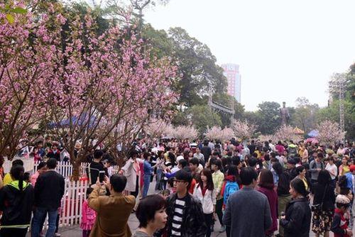 Hơn triệu người 'check in' Lễ hội hoa anh đào Nhật Bản- Hà Nội 2019