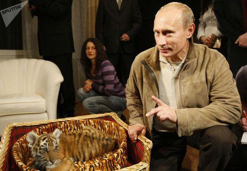 Hổ, ngựa và những món quà sinh nhật đặc biệt của TT Putin
