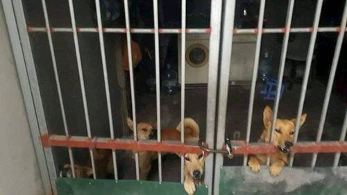 Vụ bé 7 tuổi tử vong vì bị đàn chó cắn: Chủ nuôi chó bị xử lý thế nào?