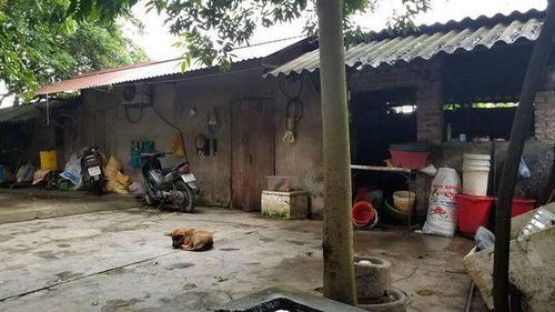 Vụ bé trai bị đàn chó cắn tử vong: Đàn chó dữ từng tấn công nhiều người, chủ nuôi vẫn thả rông