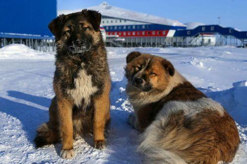 Nga lần đầu tiên công bố căn cứ mới ở Bắc Cực