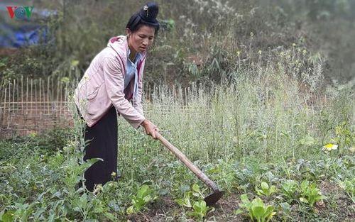 Bất cập trong đào tạo nghề cho lao động nông thôn ở Nậm Pồ, Điện Biên