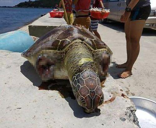 Phát hiện xác rùa biển quý hiếm dạt vào bờ biển Vĩnh Hy