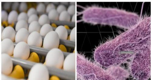 Nhiều nước thu hồi trứng do nghi nhiễm khuẩn, tránh tuyệt đối ăn trứng sống