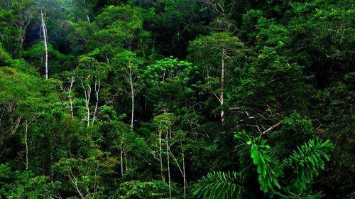 Người Thái giữ rừng