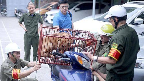 Theo chân đội săn bắt chó thả rông tại Hà Nội