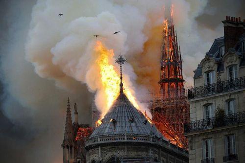 Hàng nghìn cây sồi và nhiều thập kỷ để sửa Nhà thờ Đức Bà Paris?