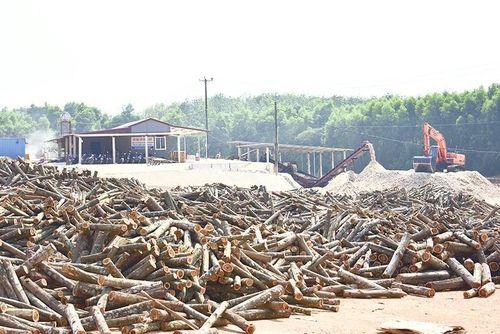 Làm nhà máy gỗ dăm chui, vẫn 'tỉnh bơ' hoạt động