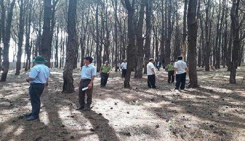 Phó Chủ tịch tỉnh Gia Lai đi thị sát rừng thông cổ thụ bị 'bức tử'